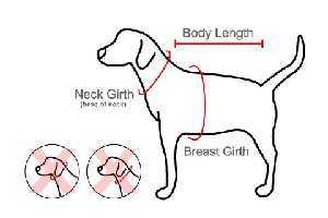 dog seat belt harness_size